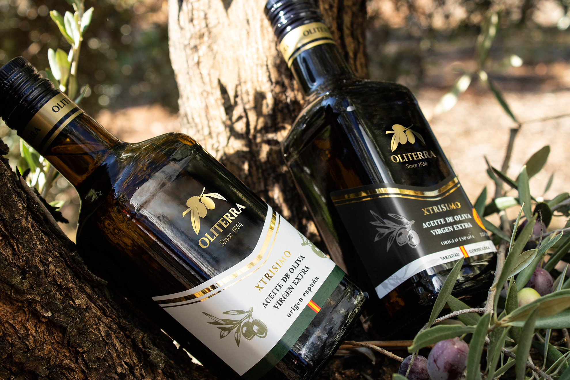 xtrisimo olive oil packaging design
